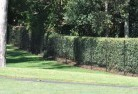 Acton TAS Wire fencing 15